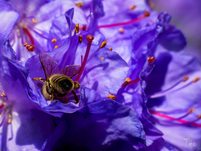 abeilles1jpg